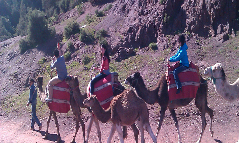 camel trekking excursion from marrakech